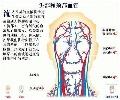脑血管供血不足症状_脑供血不足的症状有哪些