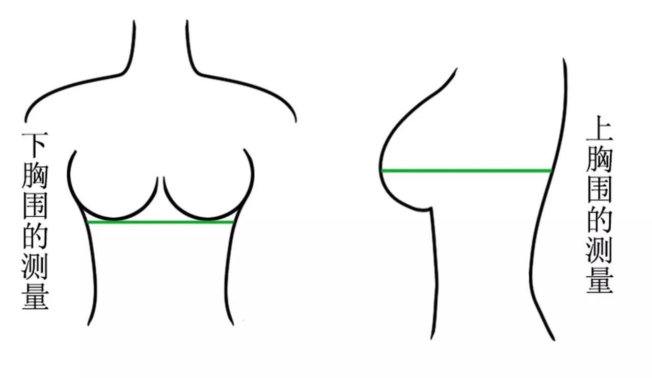 测量_下胸围   水平测量胸底部一周,即为下胸围尺寸.