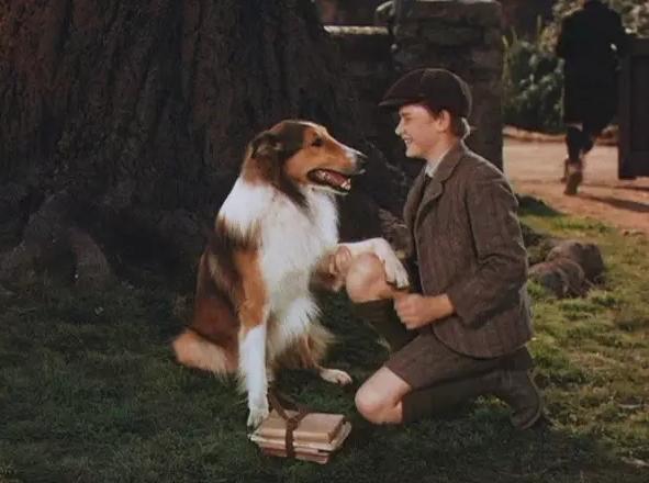 黄片人与兽交配_影片情节连贯,故事感人,充分展现了40年代电影的故事性,是人与动物