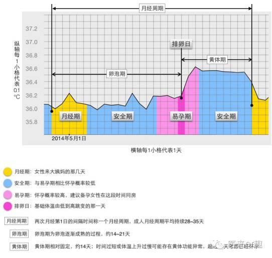 排卵期体温图_想要怀孕为什么要测量体温?