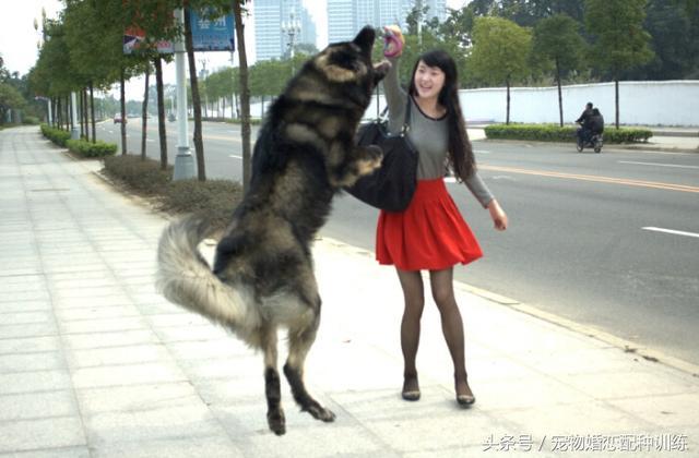 欧美美女让狗操b视频_美女和狗,美女和藏獒一样危险