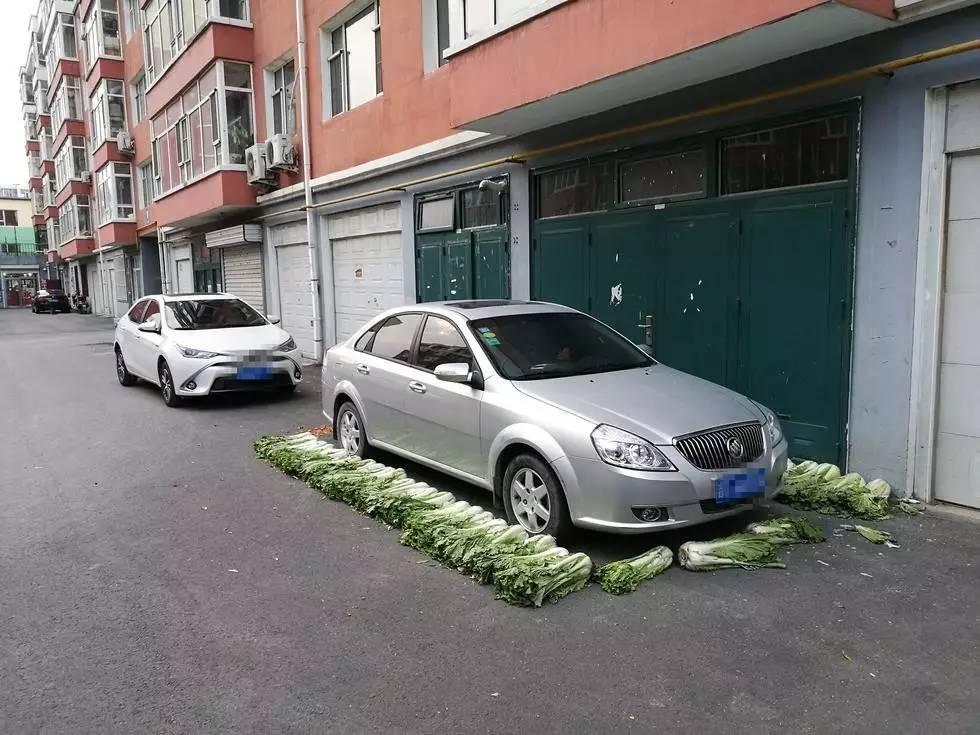大白菜摆出停车位占位 白菜:不,我不想