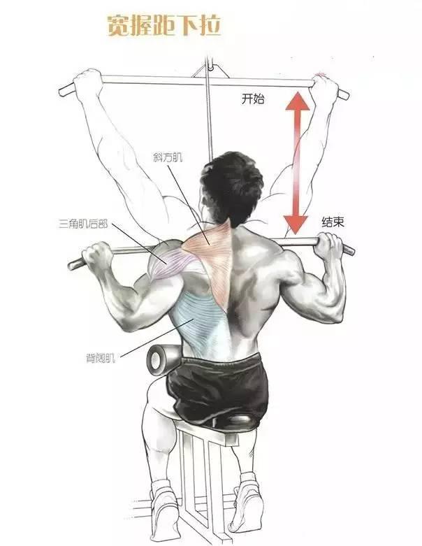 背部锻炼动作_背阔肌背部力量肌肉训练动作及图解