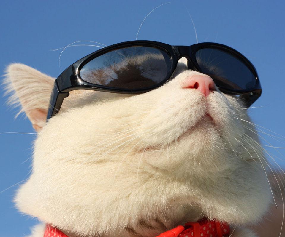 的_论如何培养家猫变成有尊严的喵,在线等挺急的
