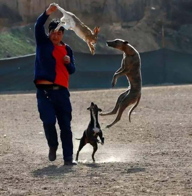 陕西细犬撵兔_细狗撵兔,99%的老陕都不知道的关中民俗!-搜狐旅游