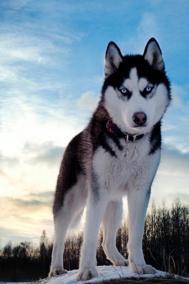 四卢镇中��l#�ki_最受欢迎的狗狗top10,看看有没有你家的狗