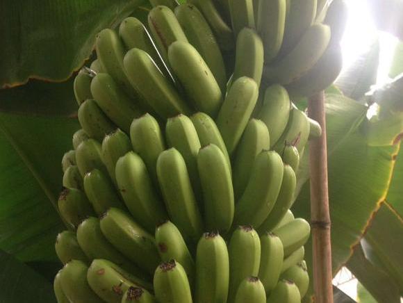 狠狠射色老大_狠狠的撸2015年大香蕉 图片合集