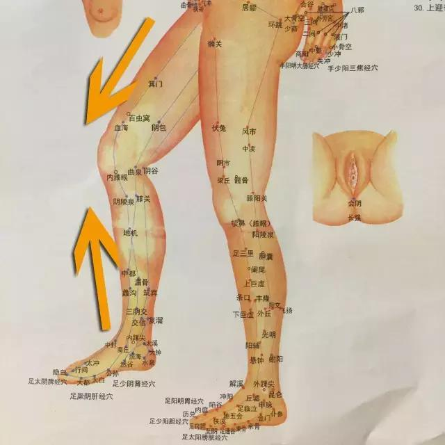 大腿经络分布图