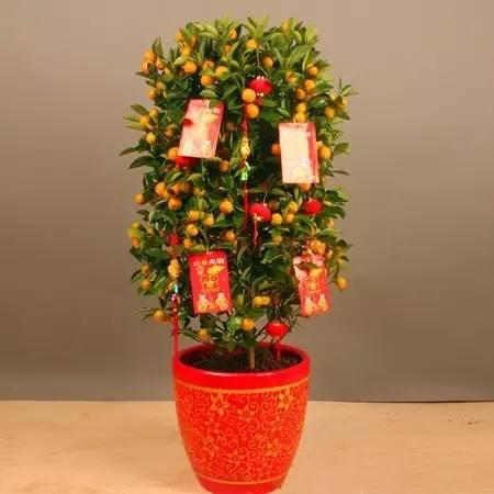 富贵竹的寓意_热点| 迎财神!新年家里摆上这些植物可以招财进宝 你不知道吗 ...