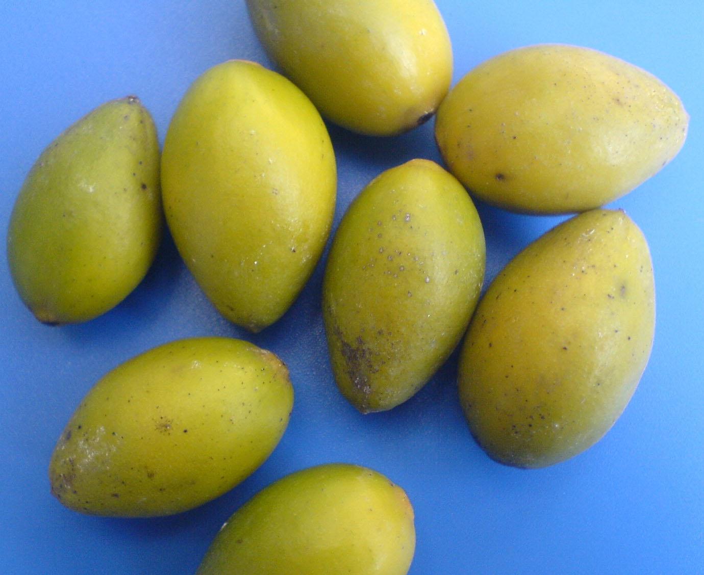金果榄_【单方一】:金果榄