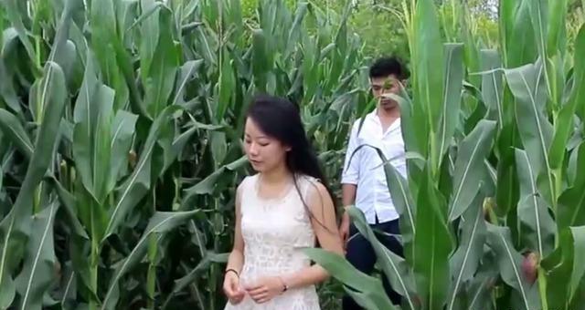 这块玉米地要有故事发生呀