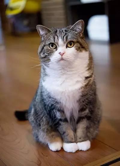 猫咪视频_一只来自日本的小猫被认证为youtube视频网站上最受瞩目的动物网红.