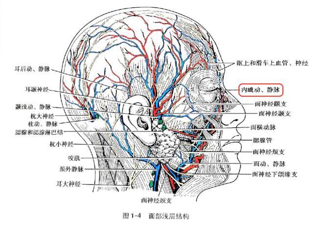 操穴_千字解剖   从眼保健操到头面部解剖