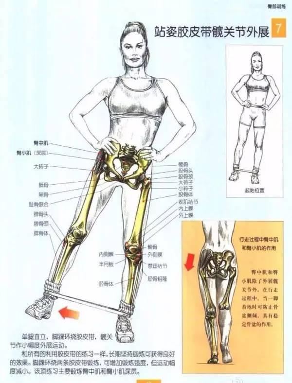 臀中肌和臀小肌的定位图片_屁股越坐越扁,这些方法打造Q弹蜜桃臀_搜狐体育_搜狐网