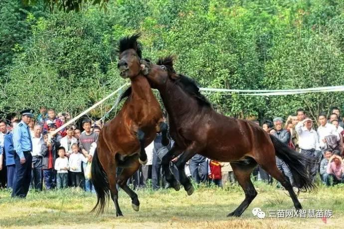 车马闹宫_三苗视频丨融水苗族坡会--吹笙斗马闹苗坡