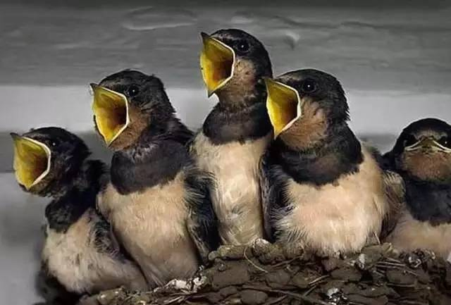 鸟偷拍_照片|| 罕见的偷拍:整个世界都窒息了_突袭旅游_突袭网