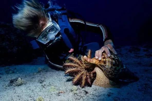 海螺 不能吃_说好的少儿动画呢?派大星的原型,有5个象拔蚌那么污!!