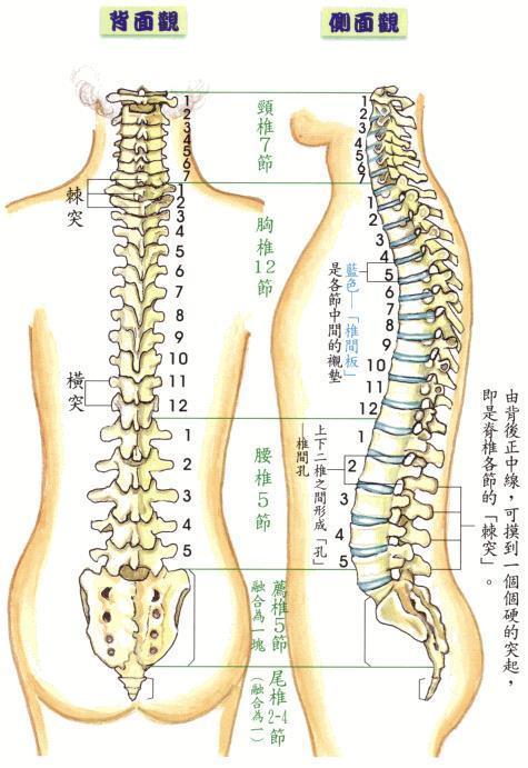 横 突起 腰椎 ネイマール 腰椎骨折の症状と治療、治る期間は?