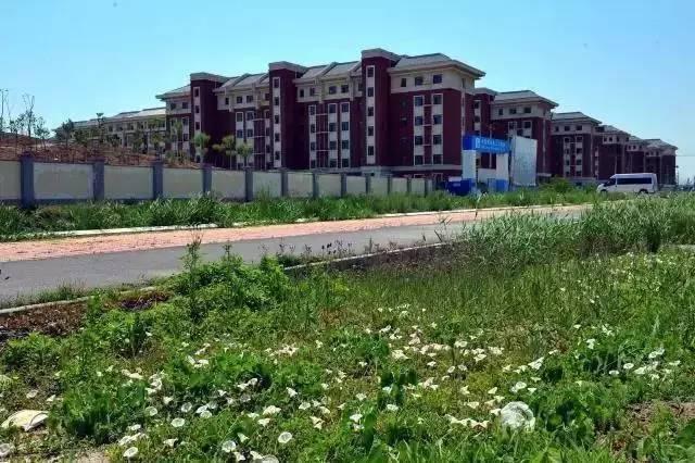 团泊_这里是团泊 正在雄起的天津第四个大学城