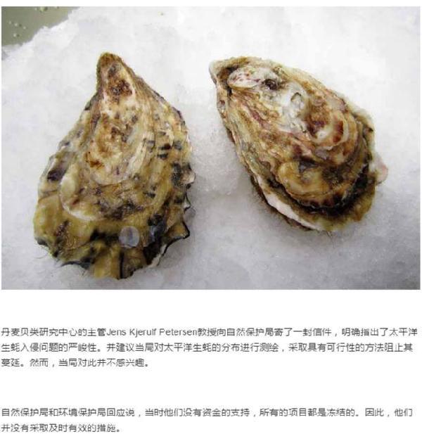 刘强东亲自指挥 京东生鲜正在评估引进丹麦生蚝的照片 - 3