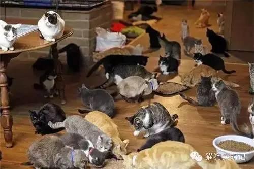 收养1100只猫