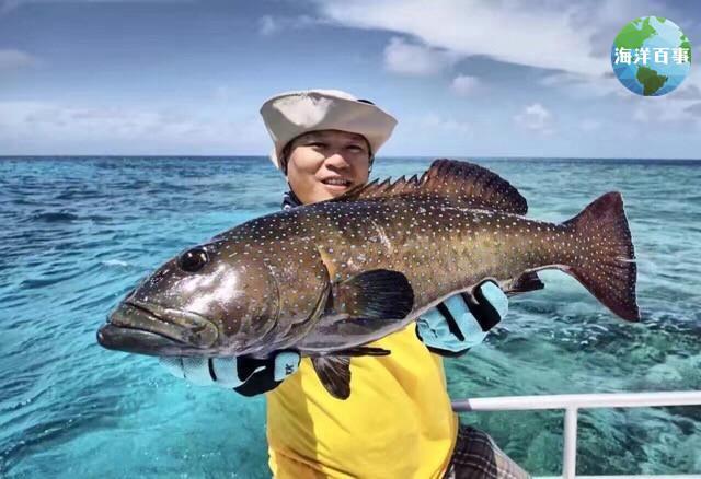 斑的位置固)�_因盛产于泰国海域,固称泰星斑.