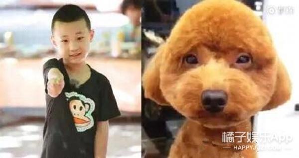 林永健孙红雷狗照片_喵界李荣浩、狗界孙红雷,跟动物撞脸的明星还真不少!