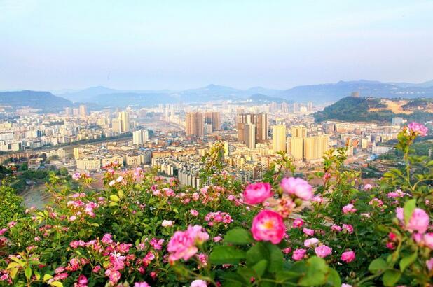"""银耳的产地_四川省人均最穷的城市,被誉为""""中国银耳之乡"""""""