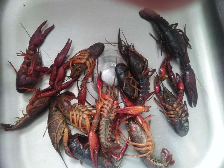 死虾为什么不能吃