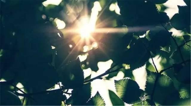 小冷丨竹深樹密蟲鳴處 時有微涼沒任性付額度提現價位有是風