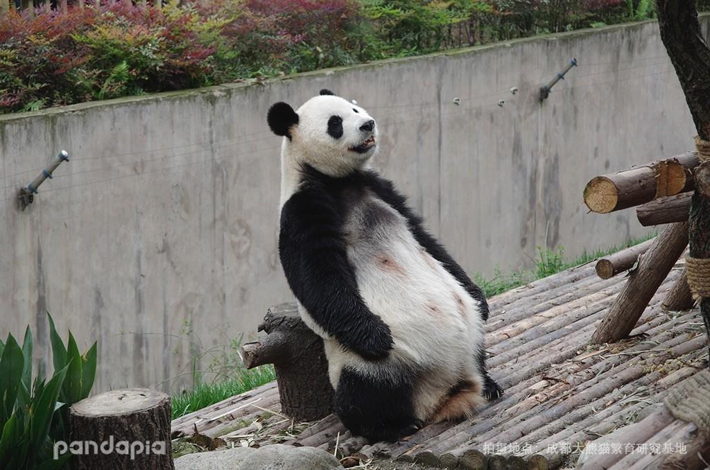 搞笑头疼囹�a_怎么教育一个熊孩子?揍一顿吧……