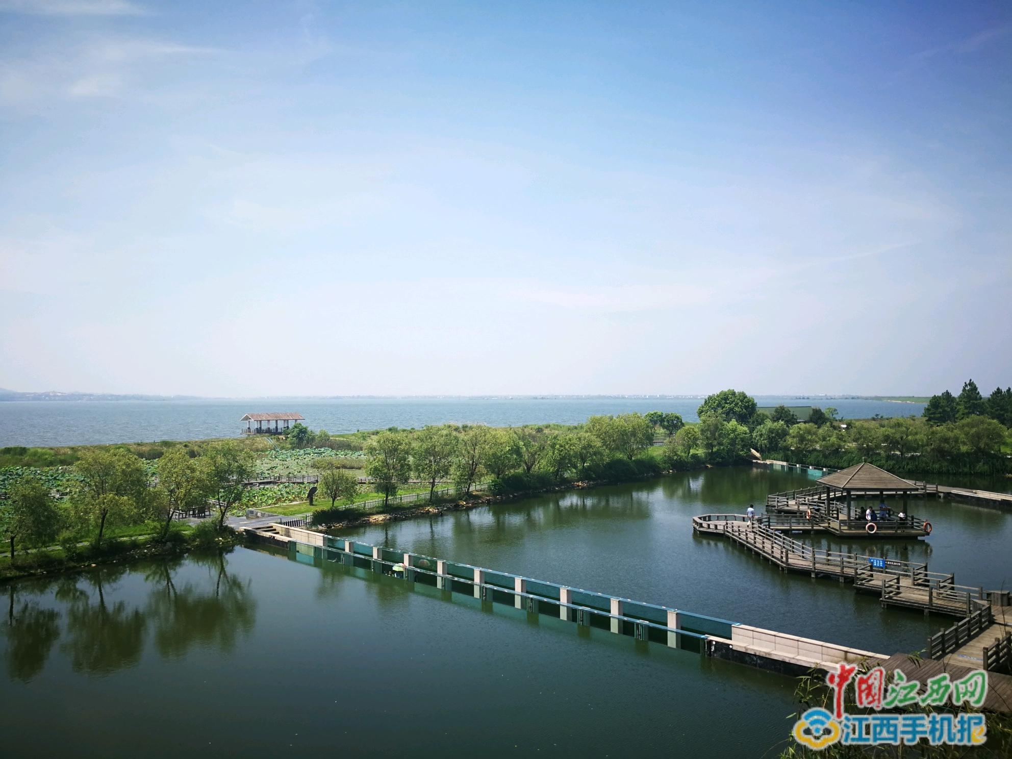 江西湿地公园_醉心如画美景 网媒记者探秘鄱阳湖国家湿地公园