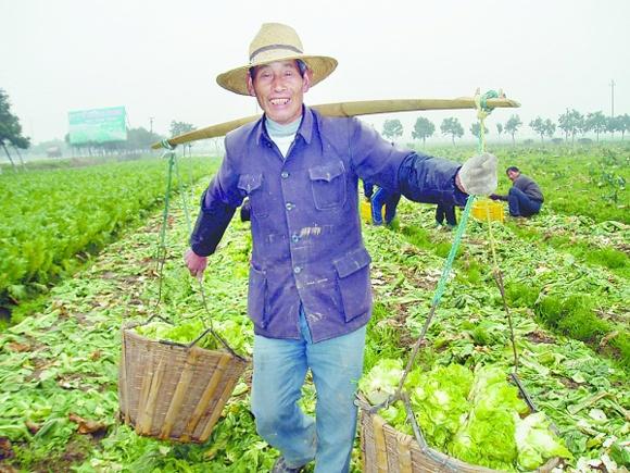 農民辛苦種菜一年,為啥還是掙不到錢?
