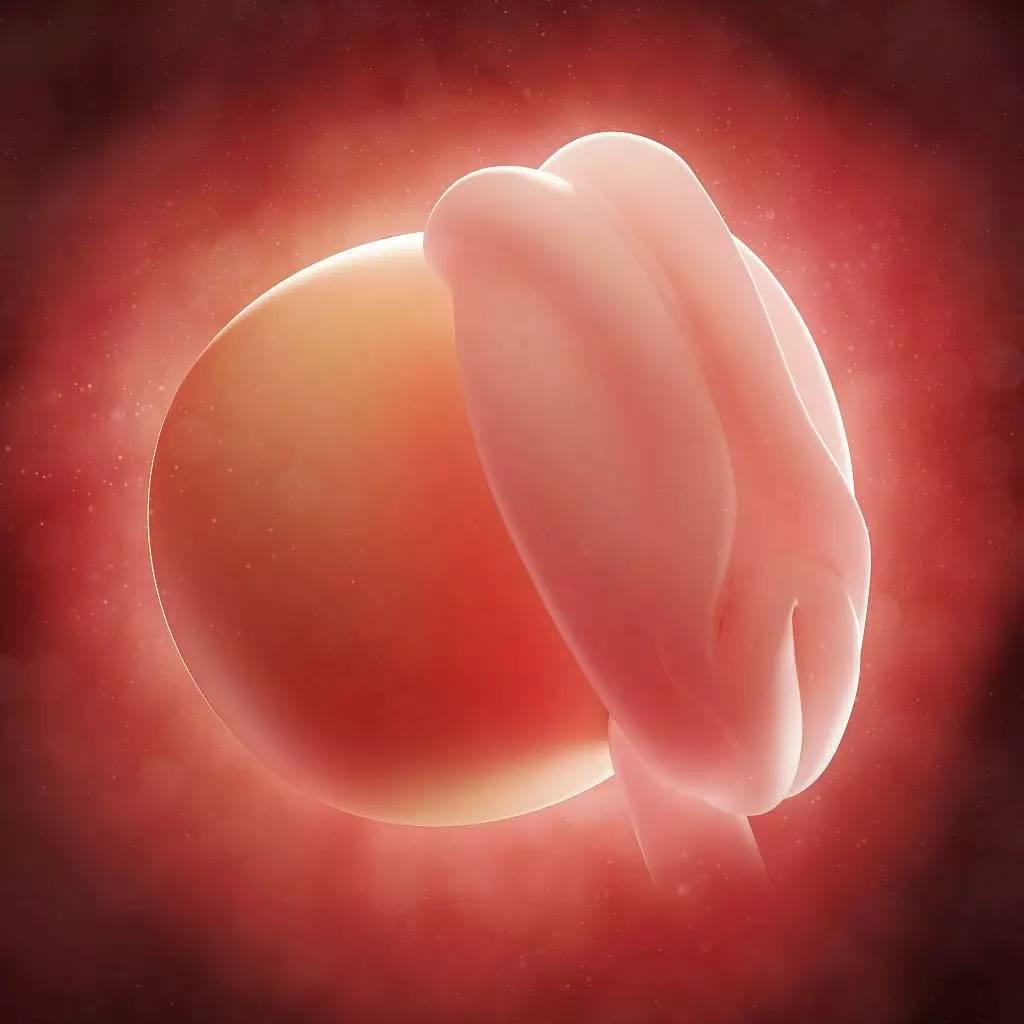 怀孕一个月胎儿图_怀孕1-10月胎儿生长发育图 ,赶紧收了!