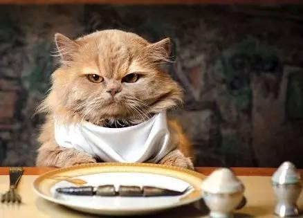 就要撸色图_6 个史上着名猫奴,原来大人物吸起猫来和我一样没皮没