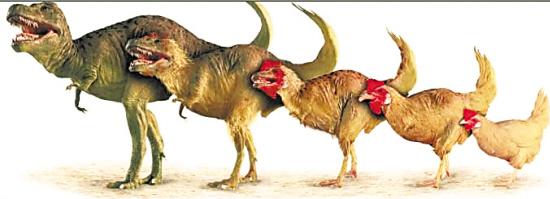 女人的逼和男人的鸡_比如,恐龙进化成了鸡,这也是非常可能的.